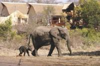 Elephant Plains Game Lodge Image