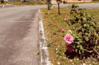 Hôtel Le Forestia Image