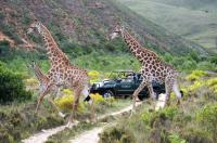 Gondwana Game Reserve Image