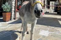Hotel La Grange Image