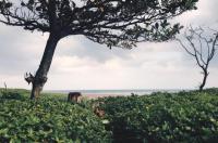 Pannzian Beach Resort Image