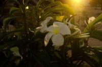 Pousada Flor do Bosque Image