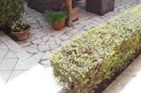 Capalbio Vacanze Image