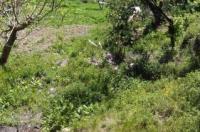 Albergo Caprile Image