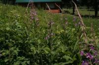 Mount Robson Lodge Image