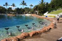 Sea World Resort & Water Park Image