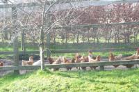 Hawthorn Cottage Image