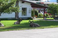 Mountain Springs Motel Image