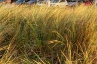 Best Western Glendower Promenade Hotel Image