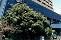 Hotel del Prado Image