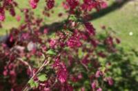 Schlossparkhotel Sallgast Image