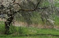 Landidyll Hotel Zum Alten Schloss Image